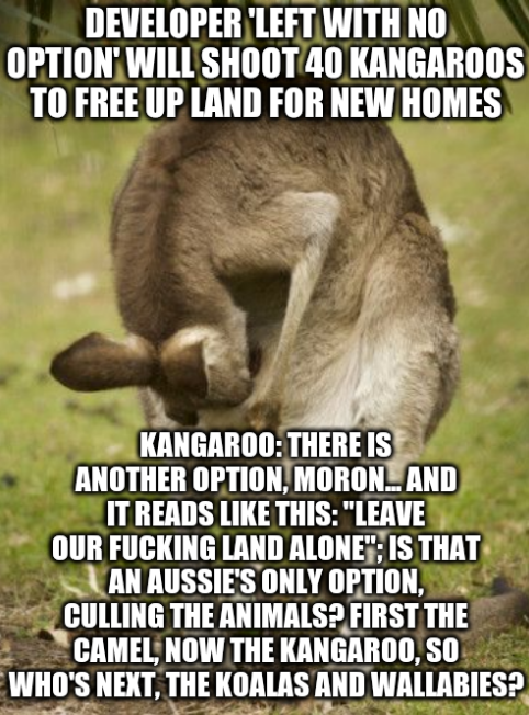 Developer 'left with no option' will shoot 40 kangaroos to free up land for new homes; Kangaroo: There is another option, moron... and it reads like this: