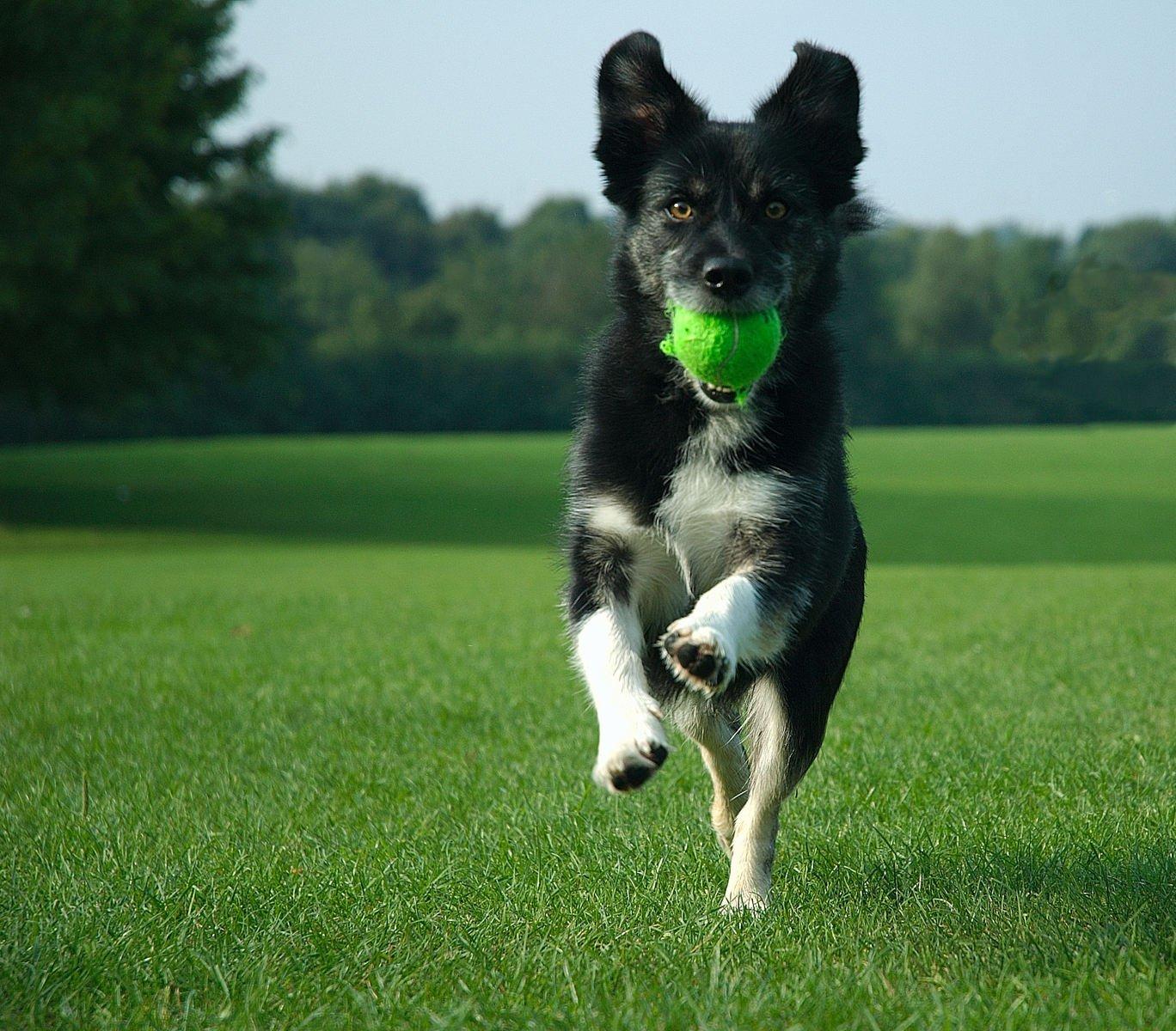 Exuberant dog